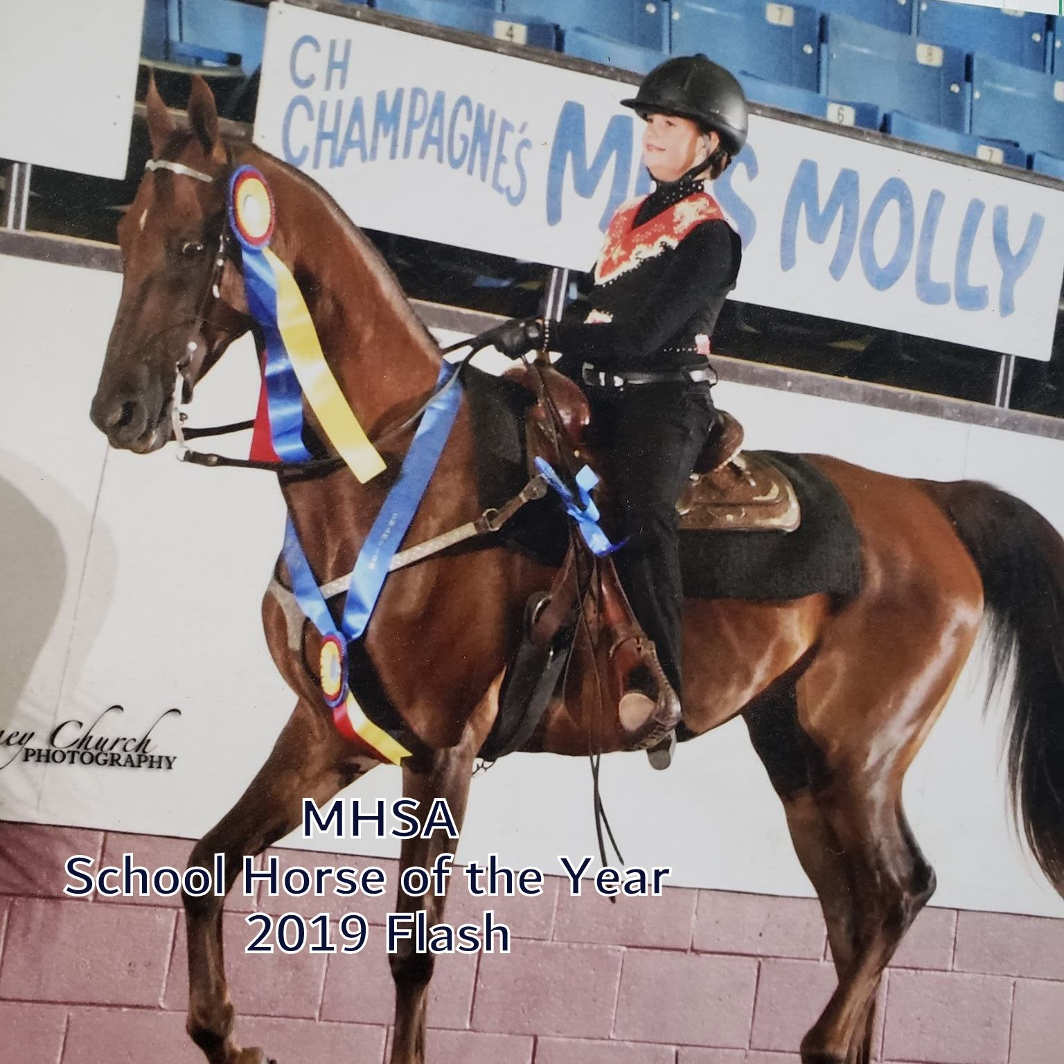 2020 School Horse of the Year